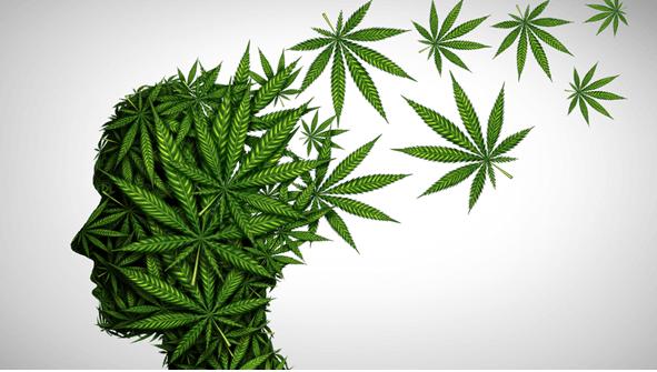 cannabis business plans